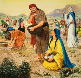 Manna ~ Food in the wilderness.
